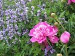 spring, gardening, flowers