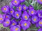 spring, flowers, gardening
