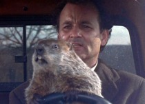 spring, flowers, garden, Groundhog Day, Bill Murray