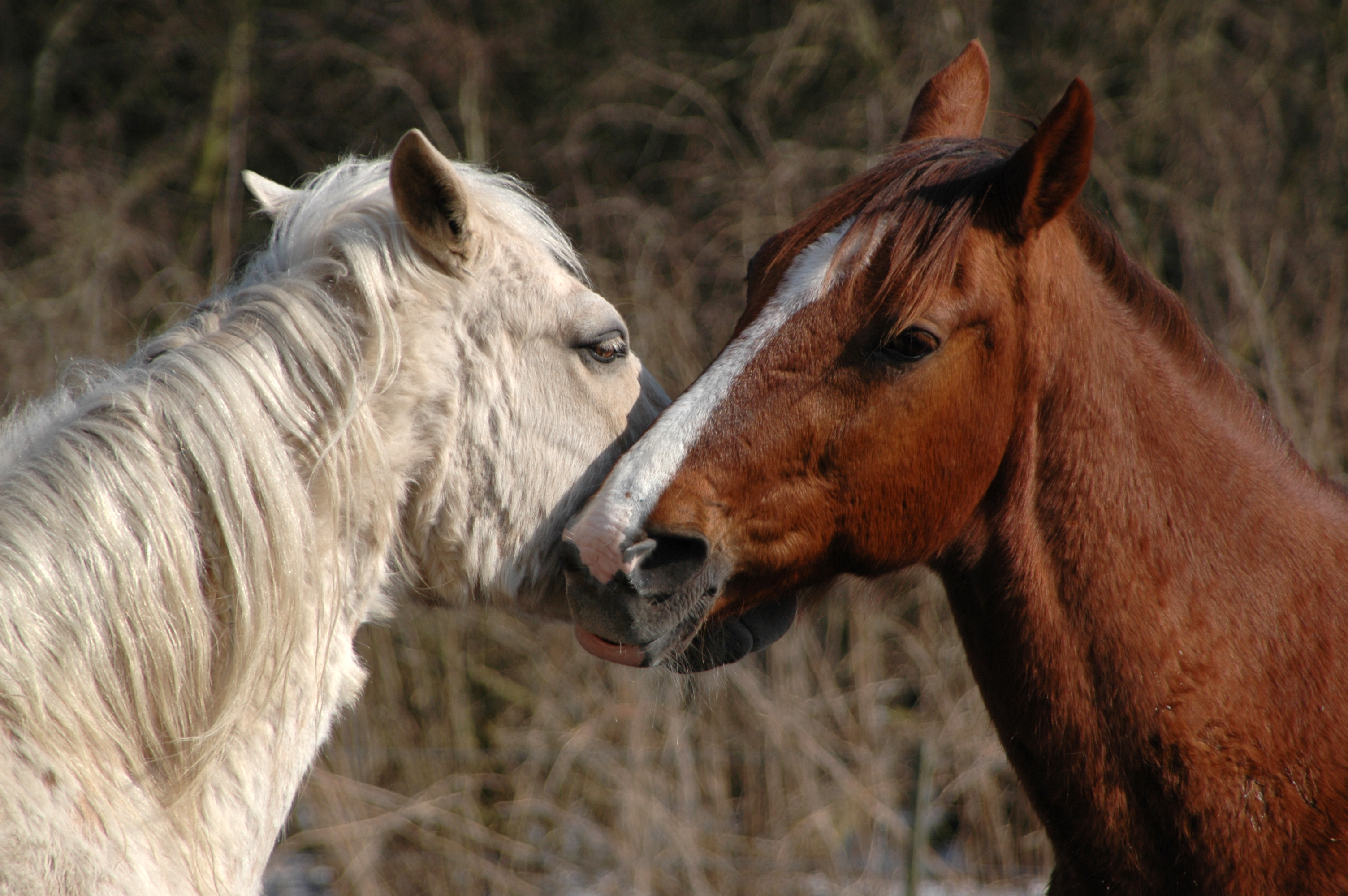 Horse Cum Shot Pics